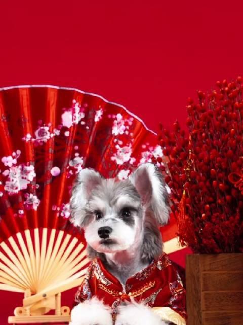 想知道狗子和中国风结合后的化学反应吗?