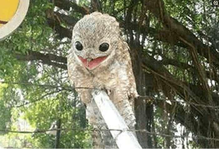 村里飞来了一只从没有见过的怪物,老人们都说:不吉利!
