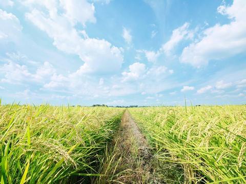 隆平高科与巴斯夫集团合作开发全新非转基因水稻系统