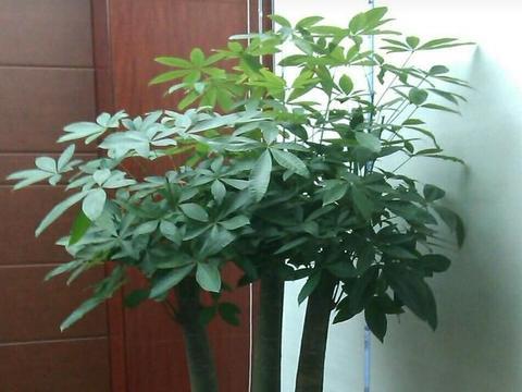 客厅摆放3种花卉,不仅寓意美好,还有益家人健康