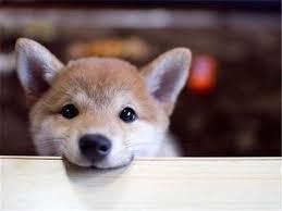 听说,在搜狗输入法可以领养流浪小动物