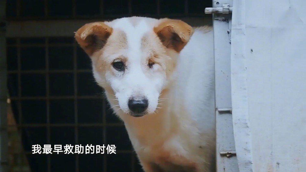 """""""爱之家""""的动物们都十分可爱,它们是被遗弃的天使"""