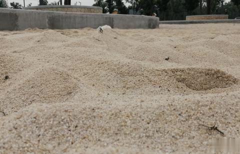 焦作市区新增2个免费沙滩园,其中一个还是水中沙滩,近500平米