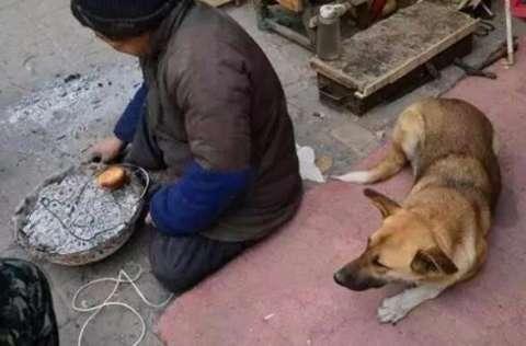 残疾老人摆摊卖布鞋,懂事狗狗每天帮忙推轮椅,眼前一幕让人泪流