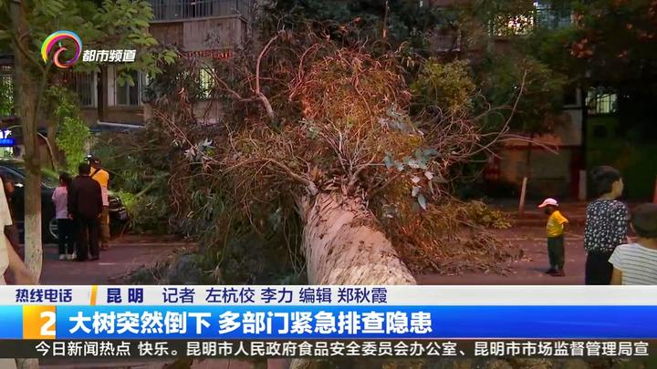 大树突然倒下 多部门紧急排查隐患
