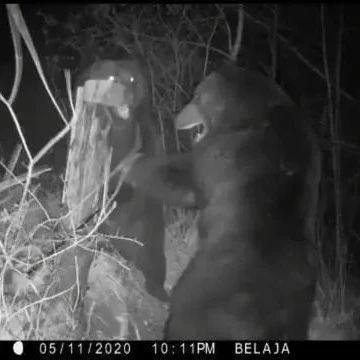 视频:中俄两只熊在两国边境发生激烈肢体冲突
