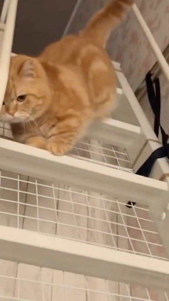 橘猫是如何下楼梯的