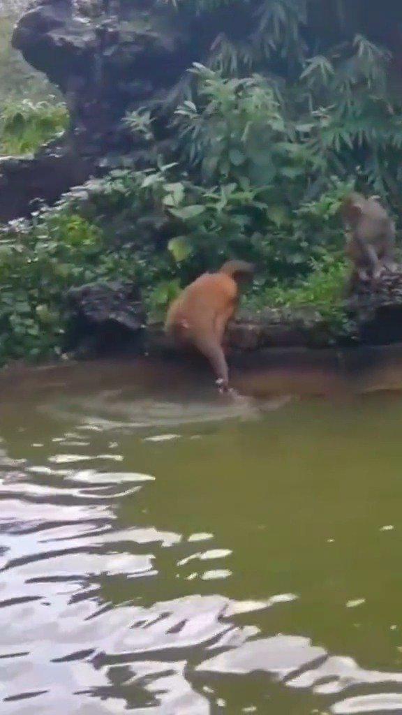 母猴和公猴因感情不和吵架了,拿小孩生气