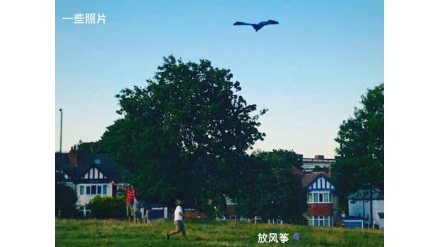 家附近的小公园饭后散步之放风