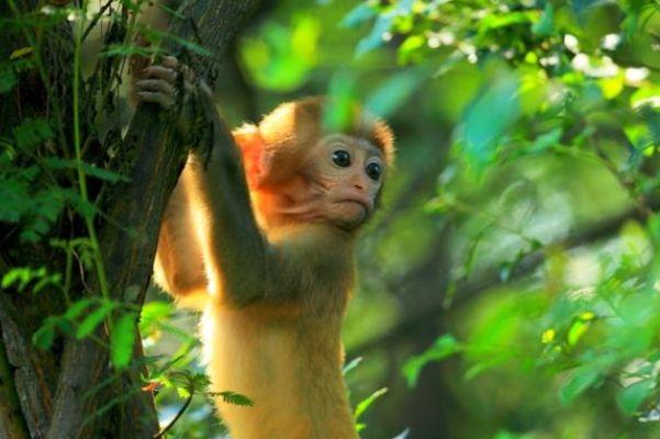 大金猴快留步,7月10日可谓是运交喜神,下旬必发横财!