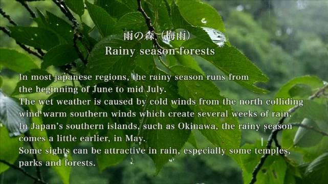 最近梅雨季节🌧️ 日本和国内都多雨 今天就在线赏雨景吧 (YouTube:Discover Nippon)