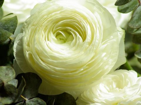 7月桃花满枝头的4大生肖,红娘相助送姻缘,将牵手真爱顺利脱单