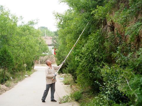 """农村7旬大叔不午休,巷道里剪酸枣树,言说""""利人利己""""是好事"""