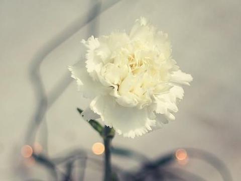 """""""不会轻易说爱的星座"""",和他们在一起看似平淡,却能长久厮守"""