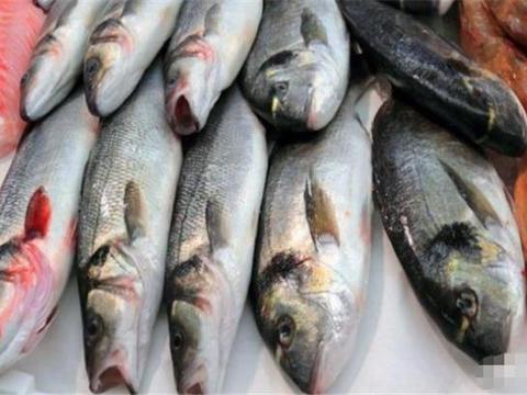 隐藏多少秘密?美国研制出转基因三文鱼,却禁止在国内养殖