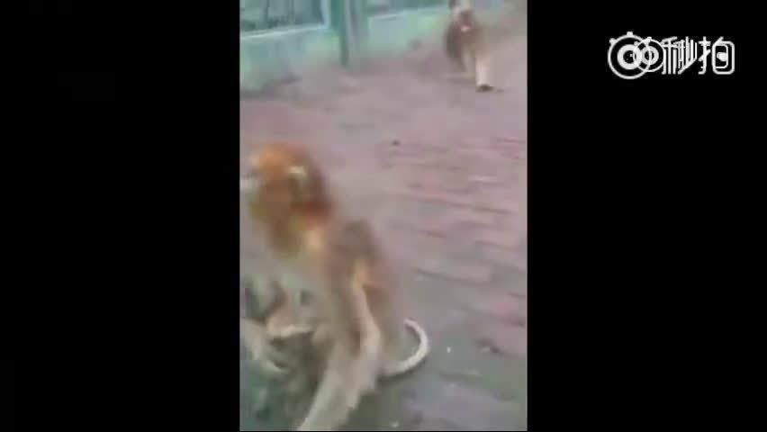 母猴抱着小猴钻入公猴怀里的那一刻!