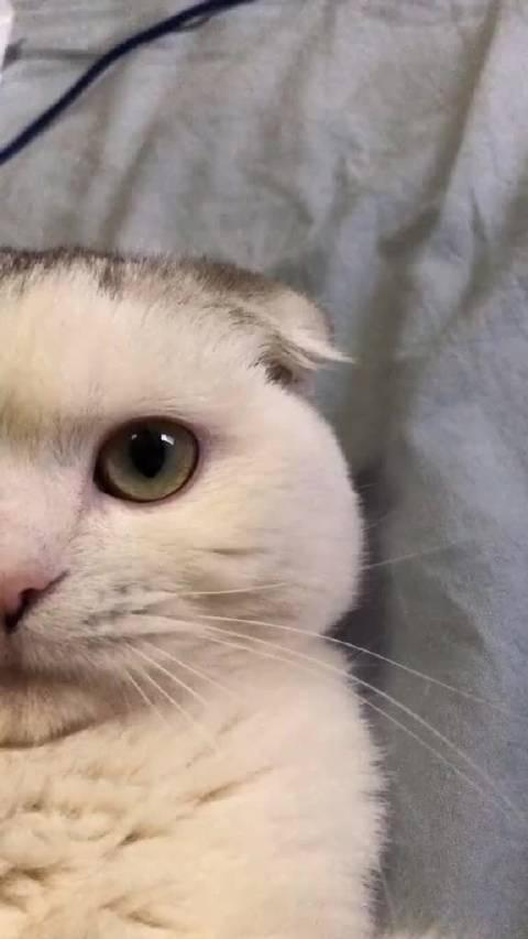 猫咪也是一个单眼皮一个双眼皮嘛 哈哈哈哈哈哈哈哈哈哈哈哈太可