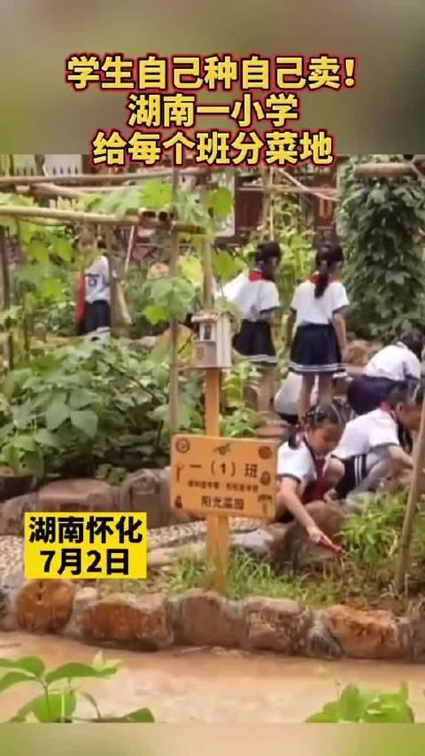 学生自己种自己卖!湖南一小学给每个班分菜地!