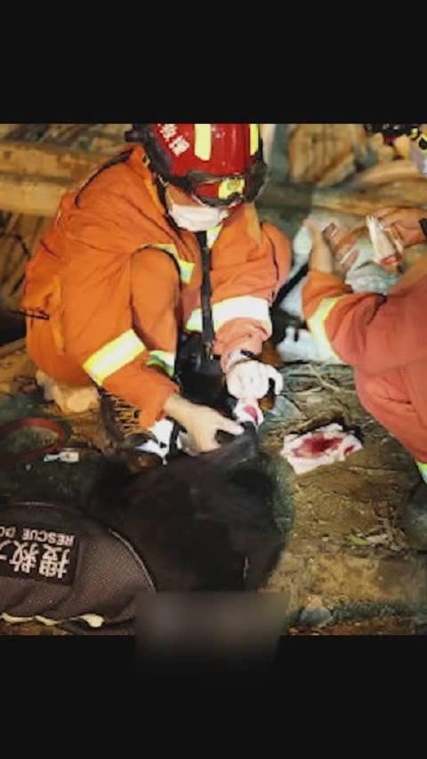 温岭槽罐车爆炸现场,搜救犬受伤,经过包扎,又重新投入战斗