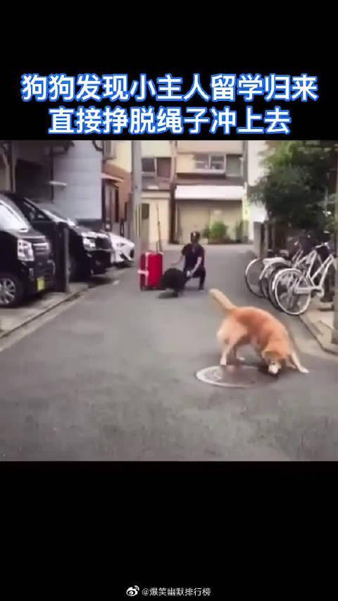 狗子的感情永远都是那么真挚而又热烈!