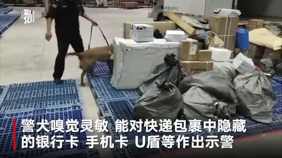 公安部调集60余只警犬查获电信诈骗作案工具15万余件