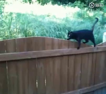 哈哈哈哈哈哈哈哈猫是怎么过窄栅栏的