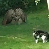 猫看到一只猫头鹰闯入后院,结果它们就这样一直对峙着!