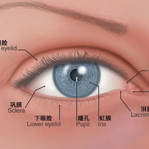 藏在你眼角的不只有眼屎,还有祖先留下的第三层眼皮
