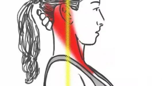 4个简单瑜伽动作经常做,保养脊柱,预防脊柱亚健康