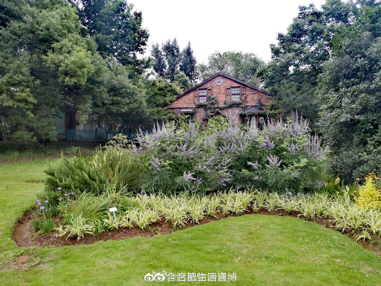 梅雨季节的 植物园,清新淡雅,生机盎然!