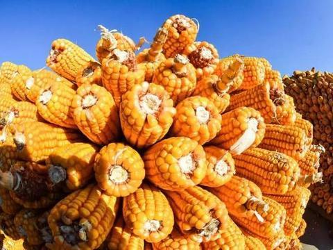 每日粮油:临储拍卖6轮 东北吉林燃料乙醇玉米收购价格继续上涨