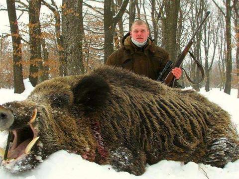 美国政府鼓励人们捕猎野猪,不仅可以带回家还有巨额奖金!