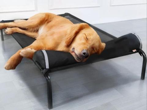梅雨季皮肤护理指南,4种方法让你的狗狗远离皮肤病