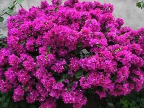 4种花,是真正的开花机器,一年四季开不停,晒晒太阳就爆盆!