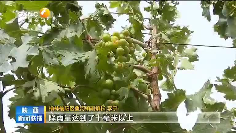强风冰雹突袭 榆林榆阳区6万多亩农作物受灾