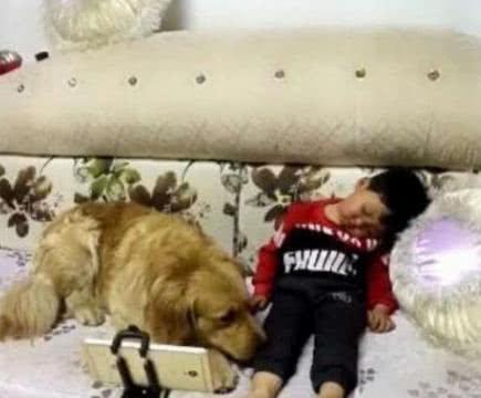 金毛陪小宝宝看动画片,小宝宝睡着了,金毛的反应让人超乎想象