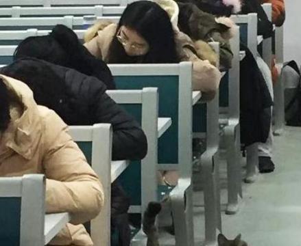 """大学考场闯进一只猫,表情是亮点,网友:""""监考员""""做得不错!"""