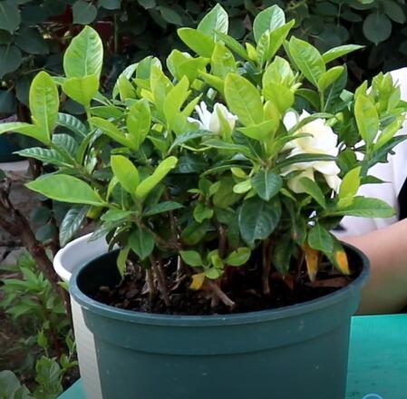 """种花要选对花盆,什么""""花盆""""最合适?颜值高又好用超便宜"""