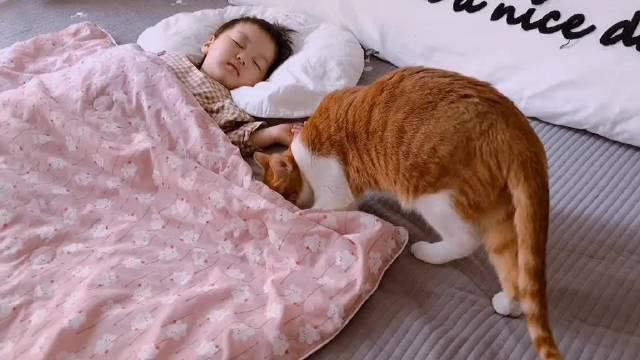 不许卖萌 …这只橘猫一不小心变成了孩子的安抚玩偶……