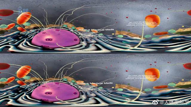 VR下细胞各种活动动画 细胞是生物体基本的结构和功能单位