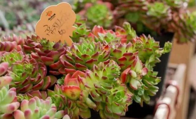 """成都最""""大型""""的花卉市场,占地2000亩,入驻商家高达上千家"""