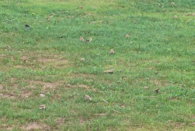 一堂自然课被两只巨蚂蚁破坏