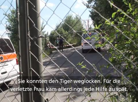 瑞士苏黎世动物园一东北虎突然发狂,55岁女饲养员不幸被咬身亡