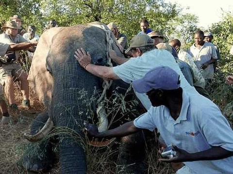 酒店门口来了一头大象, 经理上前一看急忙叫人救援!
