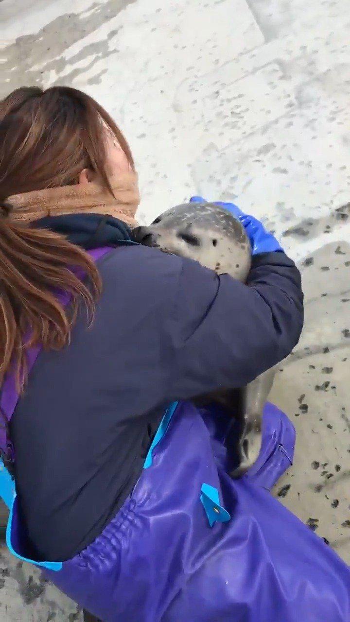 豹豹求抱抱,撒娇的海豹太可爱了,饲养员感觉好暖心!