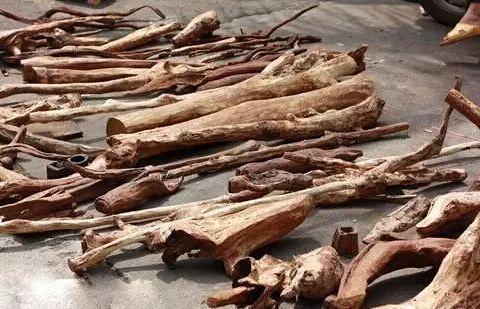 海南岛淘回来的一堆海黄料,从原木到手串的过程,那个叫胆战心惊