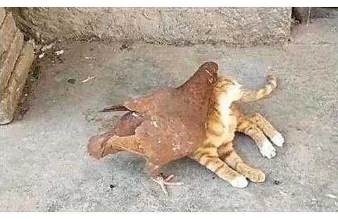 猫咪最近老往外跑,主人悄悄跟踪,看清后捂脸默默离开
