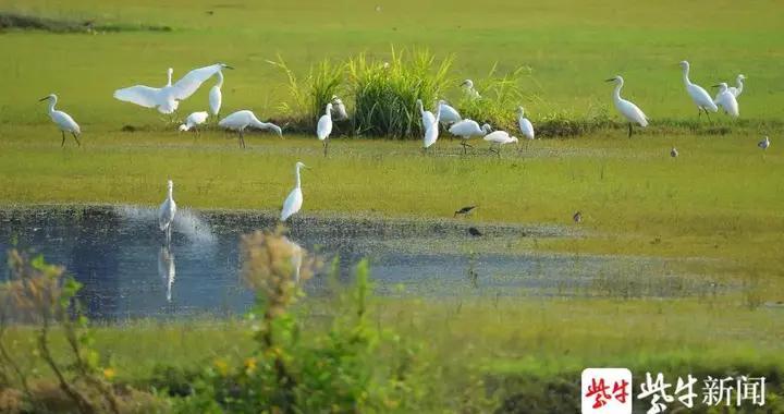 """如何做好长江大保护?苏州这个地方淘汰落后产能""""建新绿"""",让长江岸线""""长""""出美丽新内涵"""
