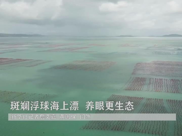 斑斓浮球海上漂 养眼更生态