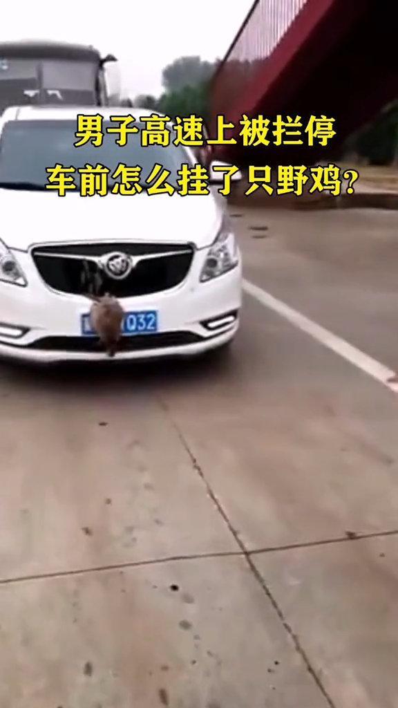 鸡挡车牌男子高速上被拦停